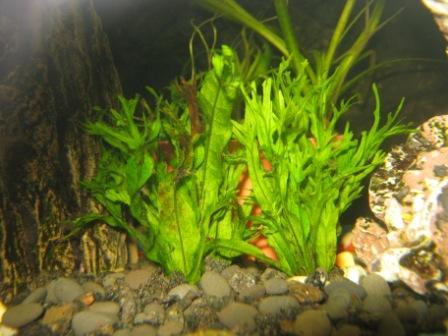 грузики для аквариума