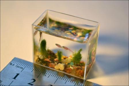 миниатюрный аквариум